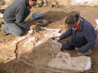 Motllura pompeiana. Prospeccions arqueològiques de can Roina al Turó de les Tres Creus