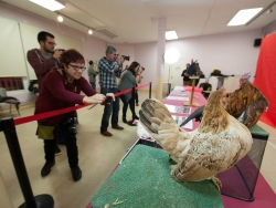 28/11/2015 - Tirada fotogràfica: Cura i cria de galls Serama