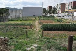 Horts socials i ecològics a l'avinguda del Riu Mogent