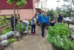 Plantada al jardí urbà amb joves del Centre Juvenil Satèl·lit