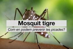 Campanyes de prevenció del mosquit tigre - Canal Salut