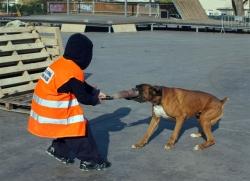 1-12-2007 - Exhibició de gossos de salvament